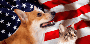 Patriotic Corgie and Cat with American Flag