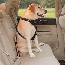 Doggy seat belt in backseat