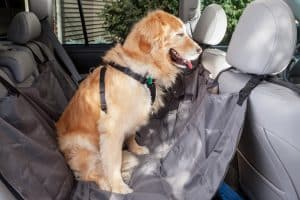 Dog properly leashed on a doggy seatbelt with a dog hammock