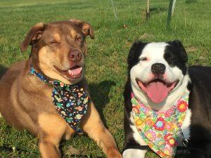 OBOL Animal Ambassadors Milos and Maggie