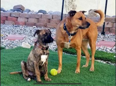 OBOL Ambassadors Arlo & Layla