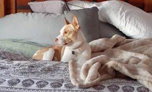 OBOL Animal Ambassador Sophie