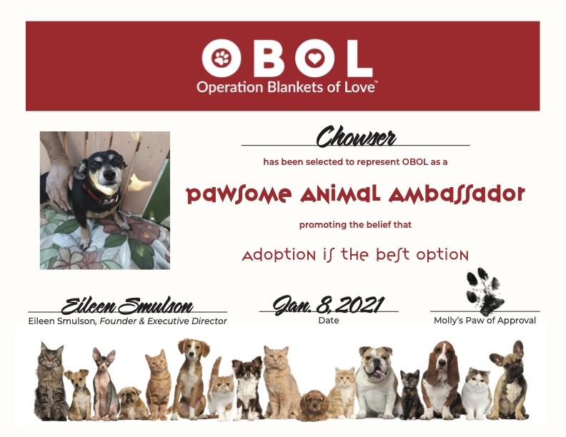 OBOL Ambassador Certificate