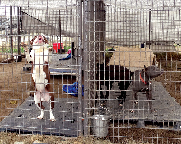Animals at the Kern Shelter