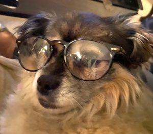 Ms. Marble, OBOL Animal Ambassador