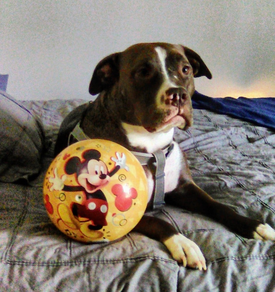 Jaxx, OBOL Animal Ambassador
