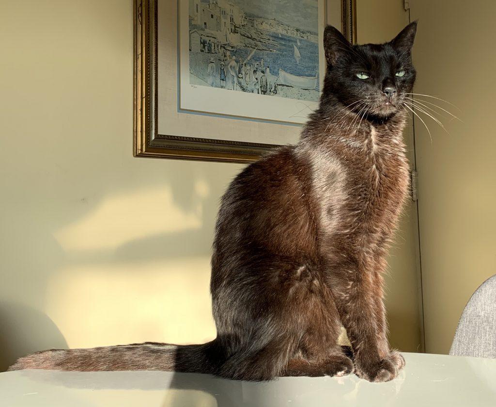 Spanky, OBOL Animal Ambassador